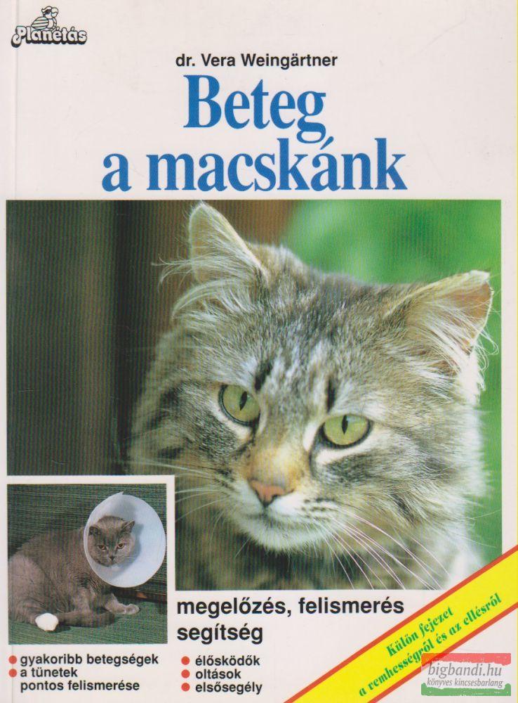 Beteg a macskánk