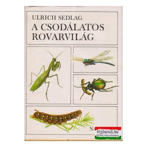 A csodálatos rovarvilág