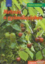 Metszés a gyümölcsösben