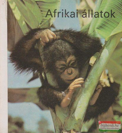 Afrikai állatok - képeskönyv